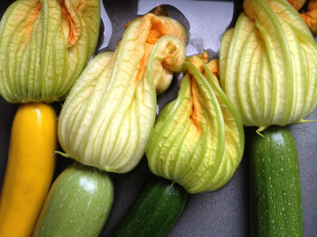 Stuffed Zucchini Blossoms with Herbed Ricotta My Judy the Foo